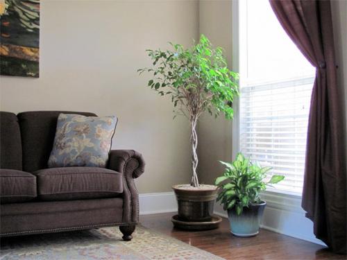 Cách bố trí cây cảnh trong phòng khách theo phong thủy